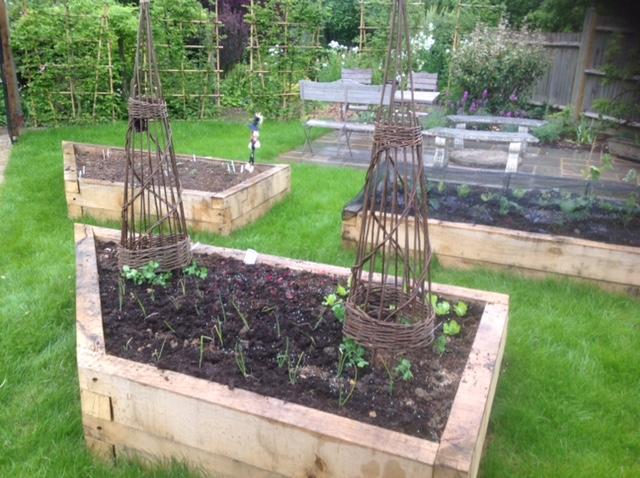 Vegetable Gardens - Evolution Landscaping
